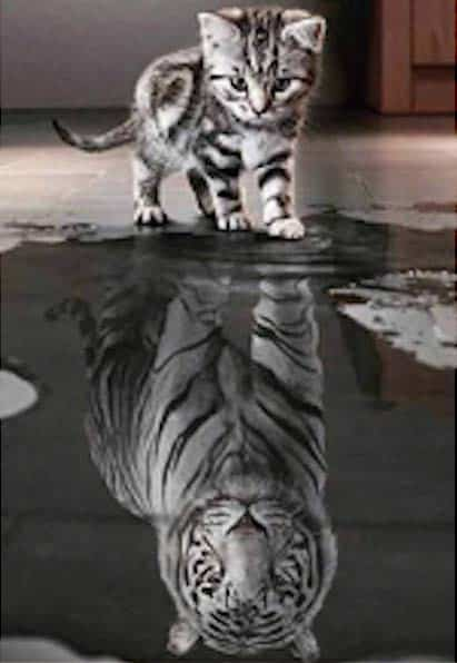 Kitten Reflection as a Tiger